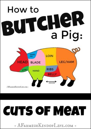 Processing a pig at home but don't know how to separate the cuts of meat? Let me show you how to find (and cut) the bacon, ham, chops, and ribs! - How to Butcher a Pig: Cuts of Meat - A Farmish Kind of Life