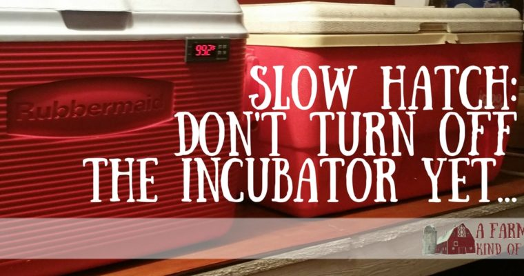 Slow Hatch: Don't Turn Off the Incubator Just Yet