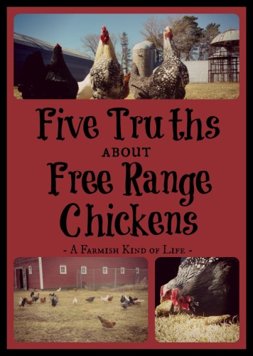There are a few things to be aware of when you have free range chickens...
