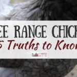 Free Range Chickens: 5 Truths To Know