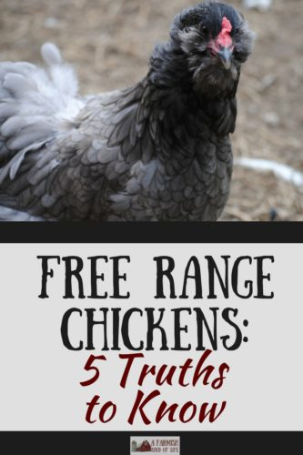 Free range chickens are fun to watch, but there are five truths you should be aware of before letting your birds out to roam.