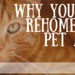 7 Reasons You Can't Rehome Your Pet At My Farm