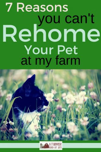 Looking to rehome your pet and think a farm is the best place? Here are 7 common reasons Farmer Joe can't take your pet - and it's not because he's mean.