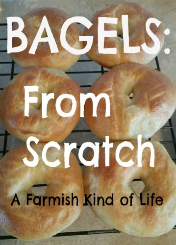Craving bagels? You can make them from scratch. So much more amazing than anything you will find in a store. - Bagels from Scratch - A Farmish Kind of Life