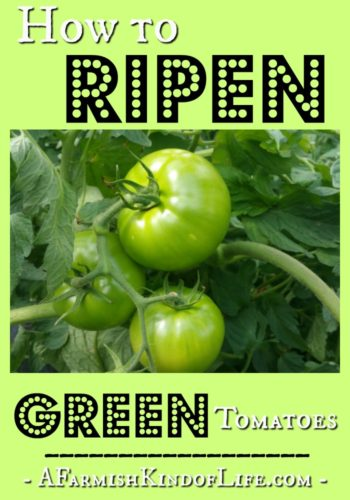 How to Ripen Green Tomatoes - A Farmish Kind of Life
