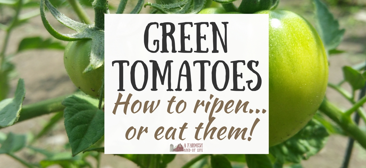 Green Tomatoes: How to Ripen…or Eat!