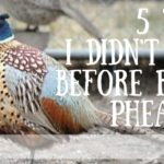 5 Things I Didn't Know Before Raising Pheasants