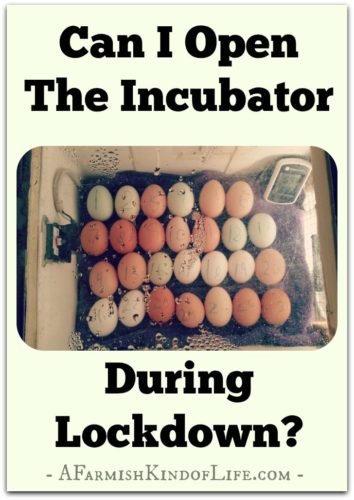 We are told not to open the incubator in the three days before a hatch known as lockdown. But...what if you HAVE to open the incubator? Have you ruined the hatch? -- Help! Can I Open The Incubator During Lockdown? - A Farmish Kind of Life