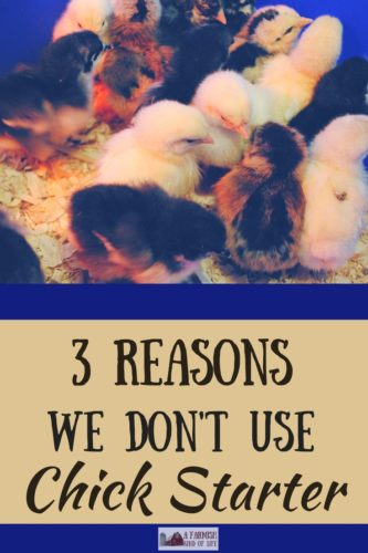 I'm going to let you in on a little secret: we don't use chick starter at our farm. In this article, I tell you three reasons why.
