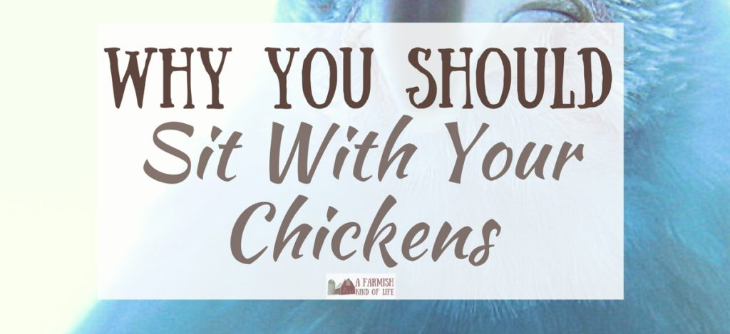"Thoughts on the ""simple"" life, how comfort and familiarity can be bad, and why we all need to spend time sitting with our chickens."