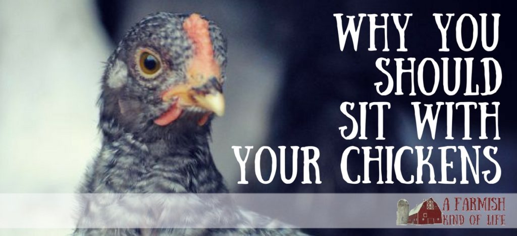 Life on the farm gets busy. Here's why you should take time to sit with your chickens. - A Farmish Kind of Life