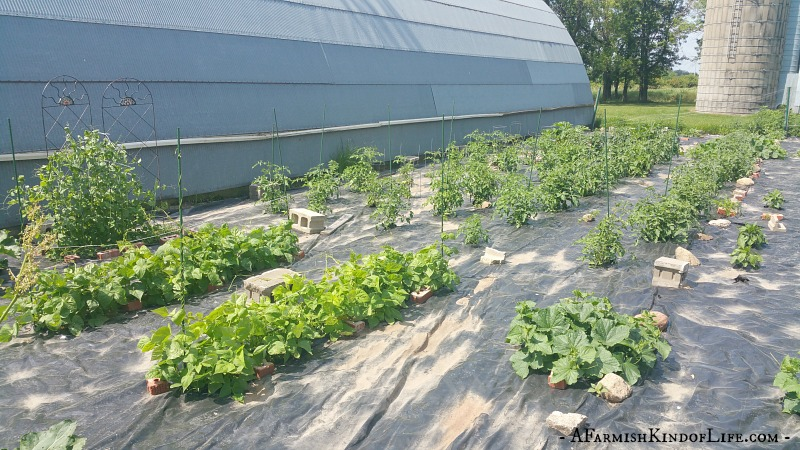 Does planting a garden save you money? Yes, but only if you do one thing. - A Farmish Kind of Life