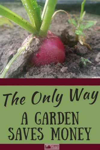 Planting a garden saves money, right? Yes, it can. But only if you follow this simple tip.