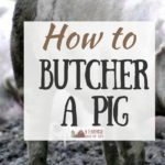 Wondering how to butcher a pig? You don't have to send your homegrown pork away for processing - you can do it right on your farm!