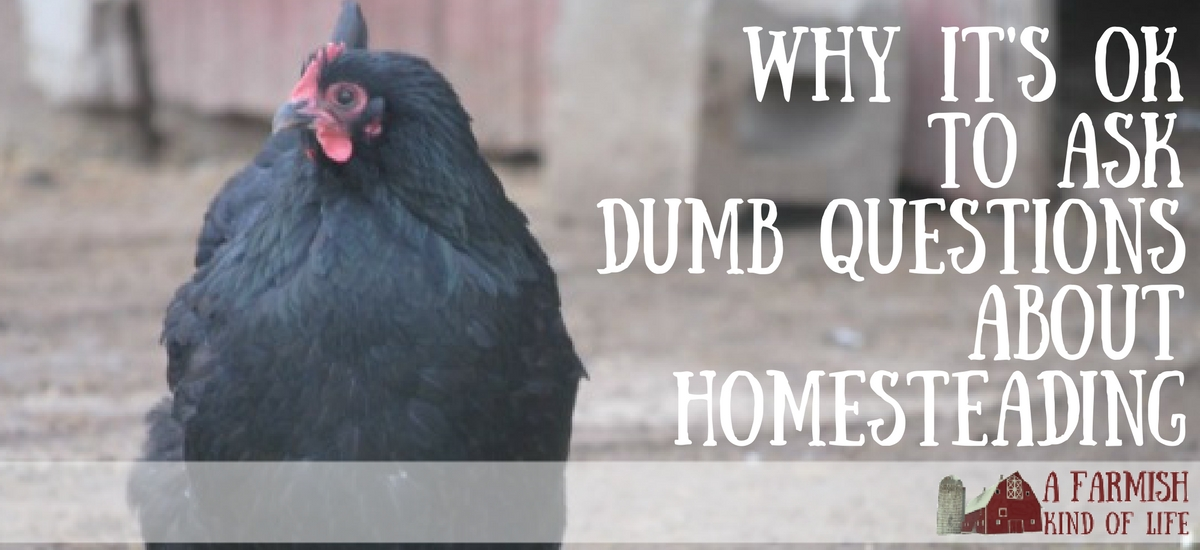 """Why It's Okay to Ask """"Dumb Questions"""" About Homesteading"""
