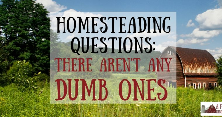 Homesteading Questions: There Are No Dumb Ones