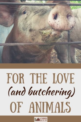 When butchering time comes around, I'm often asked how I can be so kind to an animal...and then kill it. Here's my answer.
