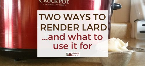Rendering lard isn't complicated. Here are two ways that we render lard, along with ideas on what to use your lard for after you make it!