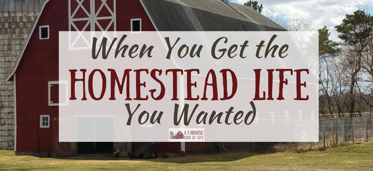 When You Get the Homestead Life You Wanted