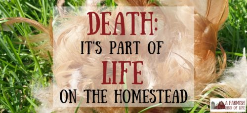 It's that very real part of homesteading that no one really likes to talk about much. If you have animals on your homestead, you will, at some point, deal with death.