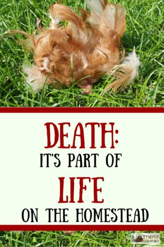 Death. It's that part of homesteading no one likes to talk about. But if you've got animals in any capacity, death comes with the territory.
