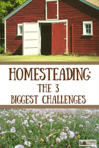 Life as a homesteader is awesome! I wouldn't want to live any other way, but there are a few homesteading challenges to face when living this life.