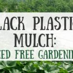 Black Plastic Mulch: Weed Free Gardening