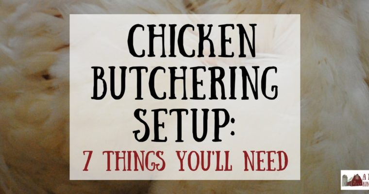 Chicken Butchering Set Up: 7 Things You Need