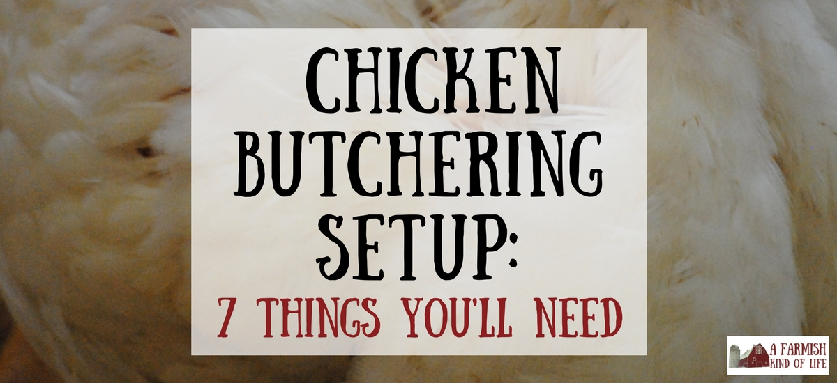 Chicken Butchering Set Up: 7 Things You Will Need