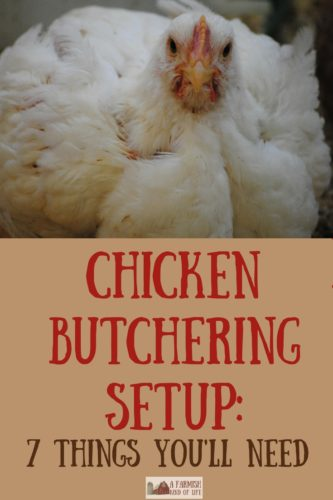 Getting ready to butcher chickens? Let me show you our chicken butchering set up, and show you seven things you will need to make your job easier.