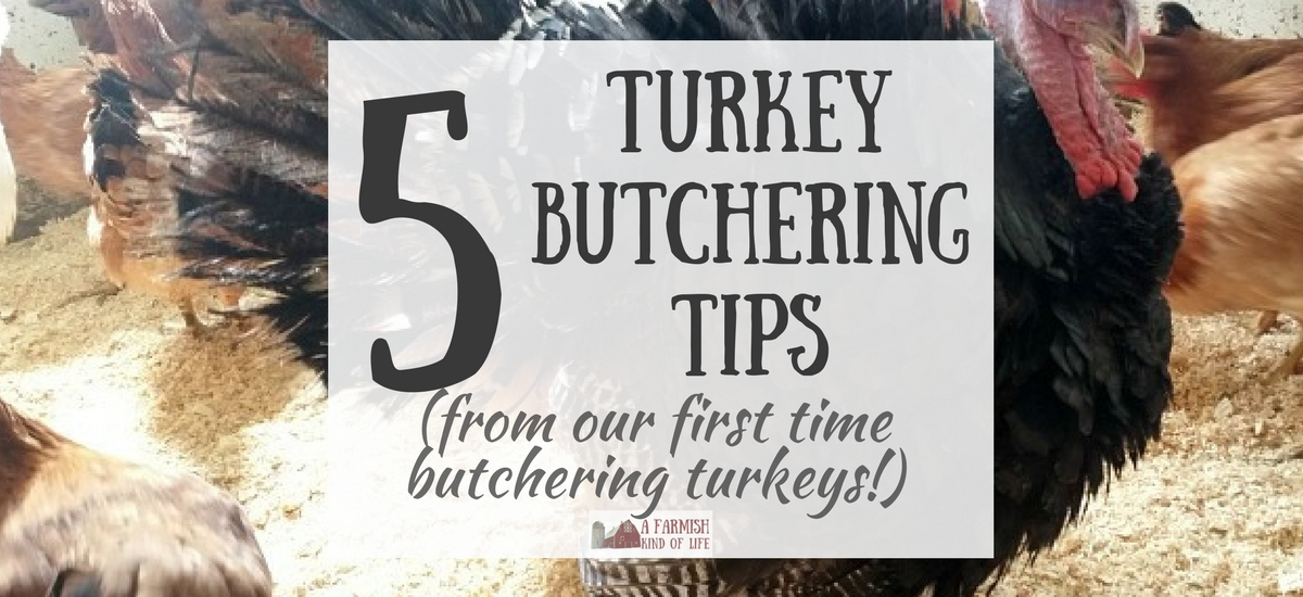 5 Turkey Butchering Tips (from our first time butchering turkeys)