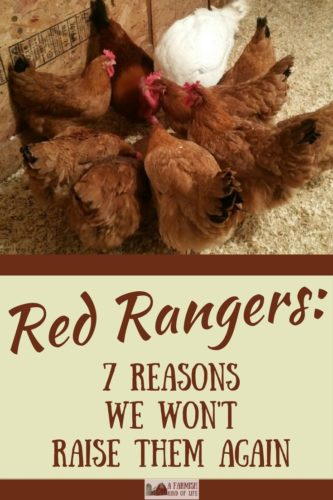 After our Cornish Cross vs. Red Rangers meat bird experiment, we've decided to not raise Red Rangers again. Here are our 7 reasons why.