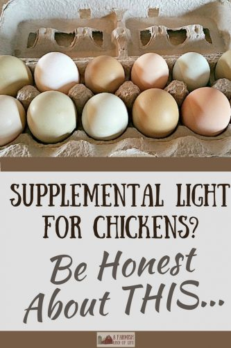 For those who choose not to use supplemental light for chickens in the fall and winter, that's fab! But here's my question...