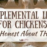 Supplemental Light for Chickens? Be Honest About THIS…