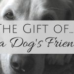 The Gift of a Dog's Friendship