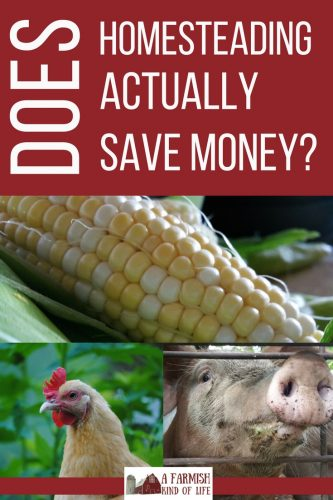 Homesteading is said to be one of the most frugal ways to live, but what's the real story behind homestead costs? Does homesteading actually save money?