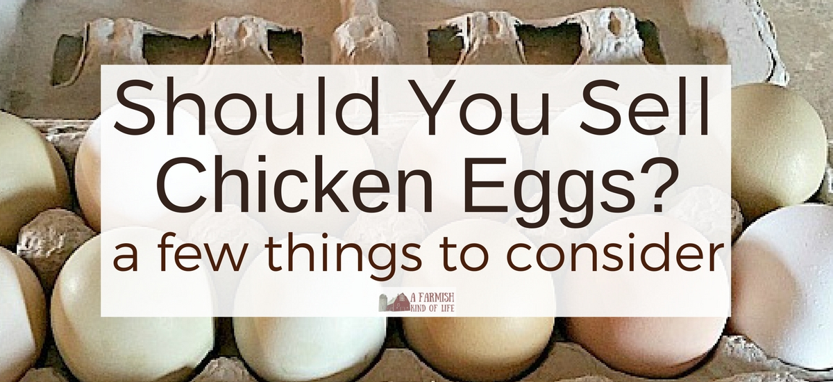 Should You Sell Chicken Eggs? A few things to consider…