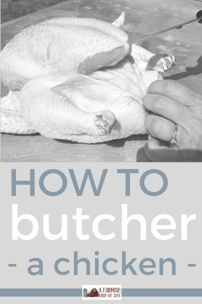 Wondering how to butcher a chicken? Let me show you how. Here is a step by step tutorial that focuses on chicken evisceration.