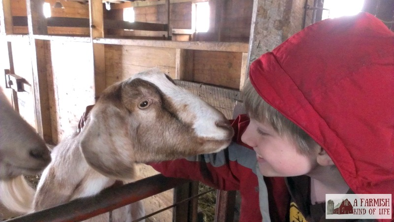 As a homesteader, you may be asked to raise animals for a friend. Here are some things to consider before you make your decision.