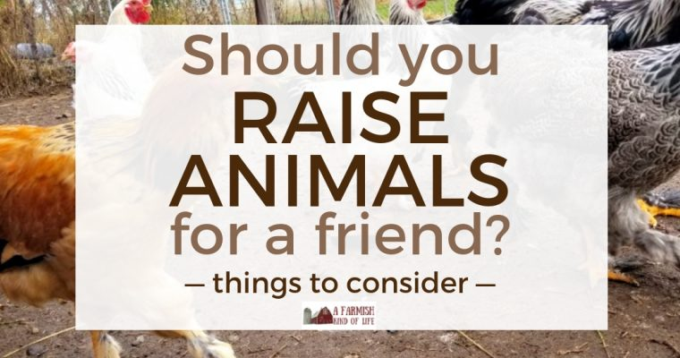 Should You Raise Animals for a Friend? Things to Consider…