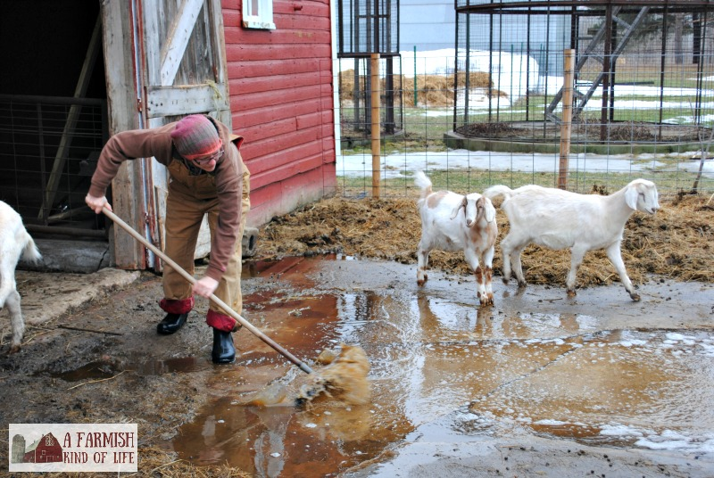 Considering life as a homesteader? Check out these 10 types of people who may struggle with homesteading or have issues dealing with the homesteading life.