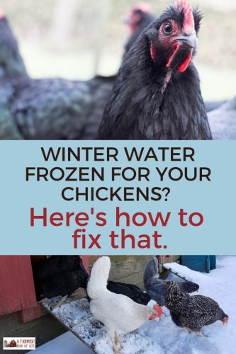 I'm often asked how I keep chickens water from freezing in the winter here at our Minnesota homestead. Here's my answer. Warning: it's not fancy. At all.