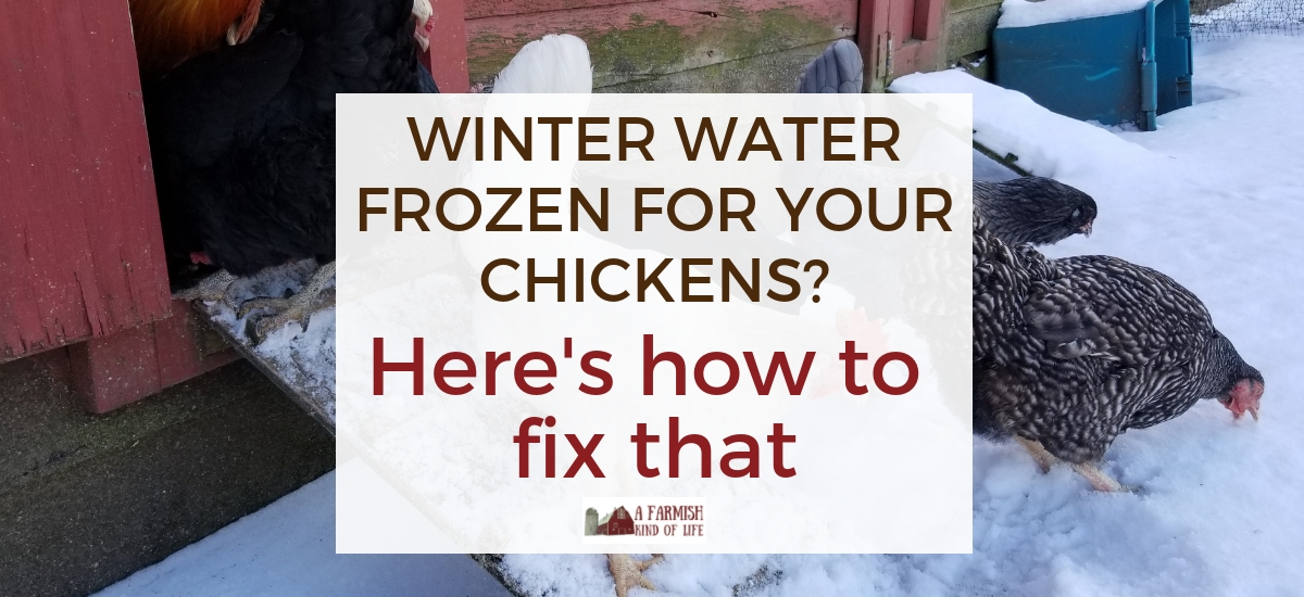 The one surefire way to keep chickens water from freezing in the winter…