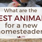 Best animals for a new homesteader