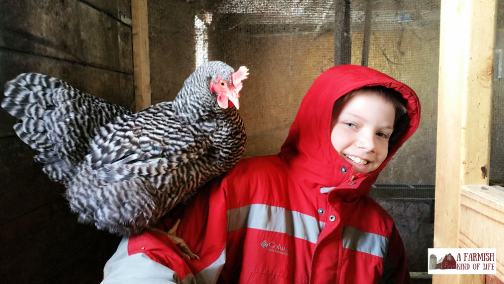 A duck is not a chicken, and a chicken is not a duck. Let's talk about ducks and chickens, and how to choose which is best for your homestead adventure!