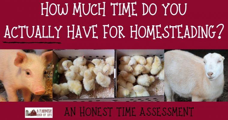 060: Homesteading time assessment