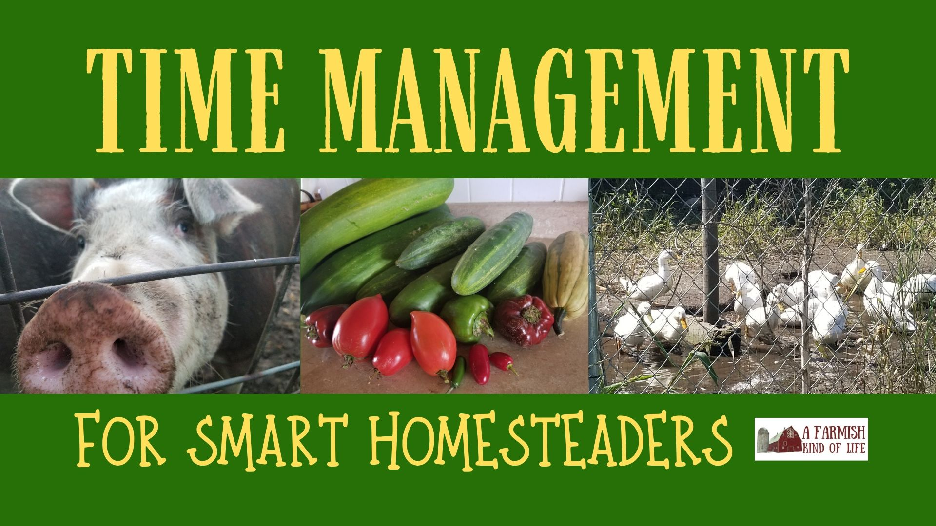 061: Time Management for Smart Homesteaders