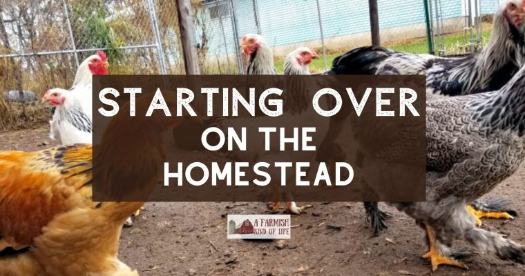 76: Starting Over on the Homestead