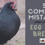 85: 5 Common Mistakes When Choosing Egg Bird Breeds