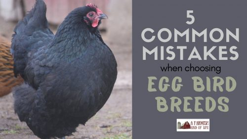Having your own supply of eggs is a great step towards self-reliance! Let's talk about 5 mistakes people often make when choosing a breed of egg bird.